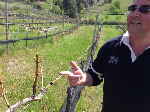 A Visit to Saxon Winery, Summerland B.C.