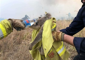 Fundraiser for Australian Wildlife & Wildfire Victims